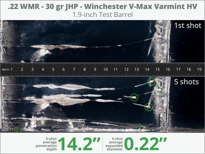Image showing Winchester .22 Magnum (WMR) 30 Grain rounds fired into ballistic gel