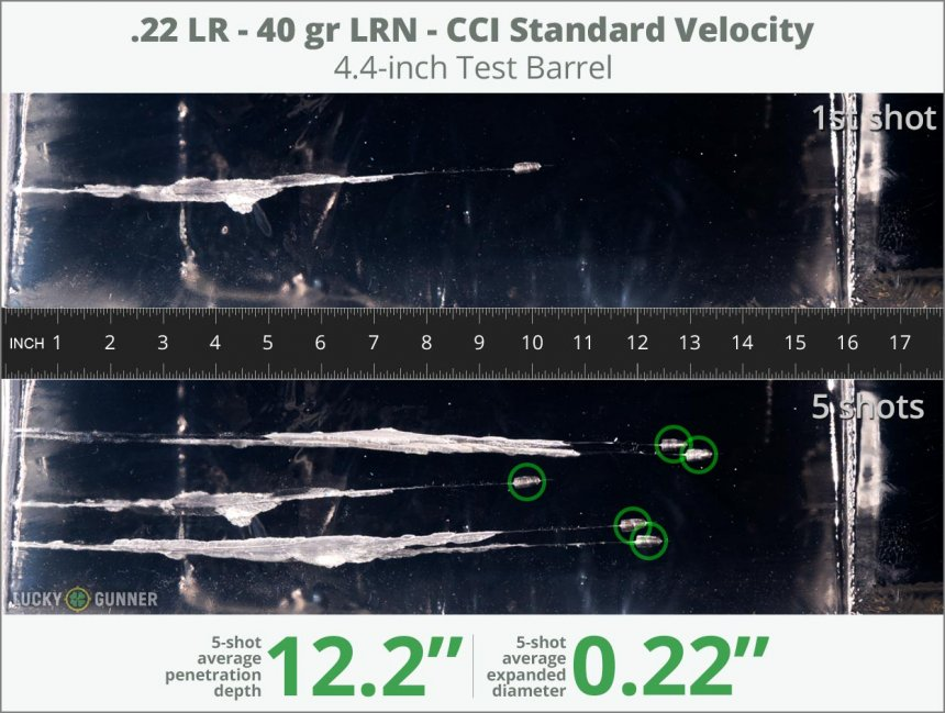 Image showing CCI .22 Long Rifle (LR) 40 Grain rounds fired into ballistic gel