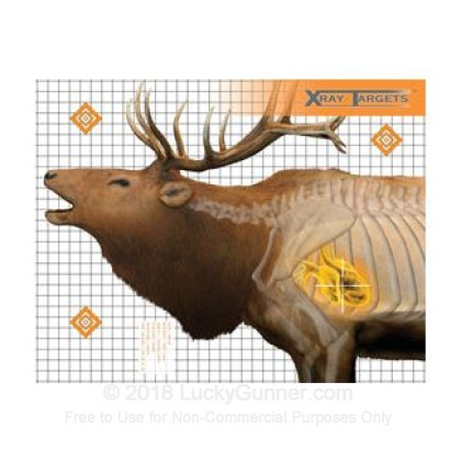 Large image of Champion X-Ray Elk Targets For Sale - Anatomy Targets In Stock