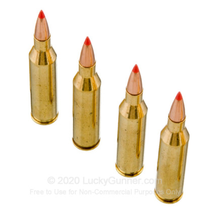 Large image of Premium 243 Ammo For Sale - 95 Grain SST Polymer Tip Ammunition in Stock by Black Hills Gold - 20 Rounds