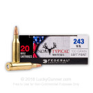 243 - 100 Grain SP - Federal Non-Typical Whitetail - 20 Rounds